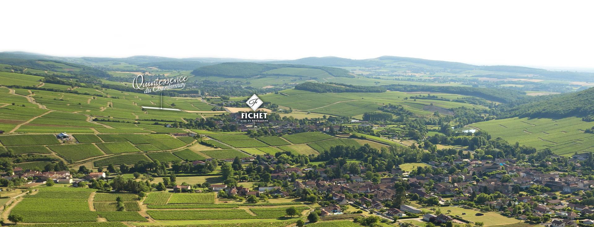 parcelle Quintessence Du Chardonnay du Domaine FICHET